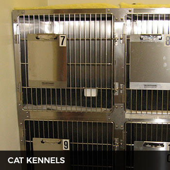 metrovets cat kennels